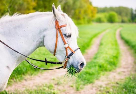 Los caballos y su alimentación con Taurus